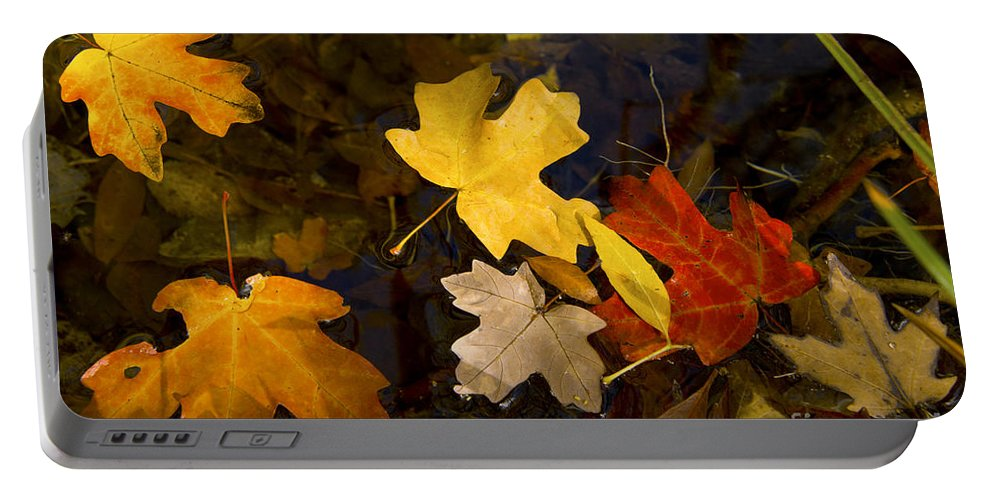 Guadalupe Mountains National Park Texas Parks Fall Autumn Leaf Maple Leaves Water Still Life Portable Battery Charger featuring the photograph Colored Floaters by Bob Phillips
