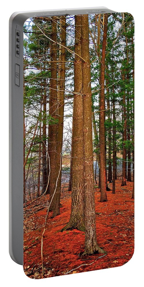 Forest Portable Battery Charger featuring the photograph Colorful Carolina Forest by Frozen in Time Fine Art Photography