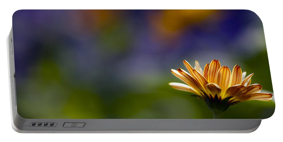Daisy Portable Battery Charger featuring the photograph Colorfully Soft by Edward Kreis