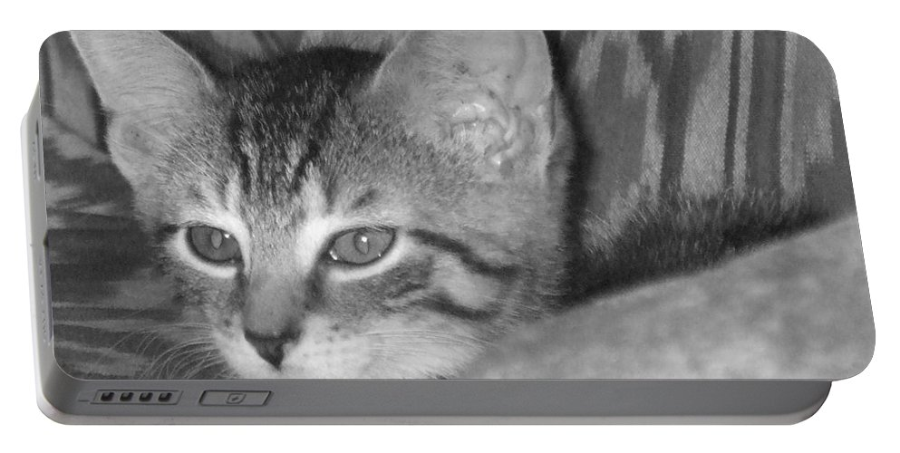 Kitten Portable Battery Charger featuring the photograph Comfy Kitten by Pharris Art