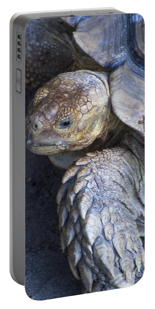 Turtle Turtles Tortoise Tortoises Animal Animals Creature Creatures Louisiana Purchase Gardens And Zoo Monroe Nature Portable Battery Charger featuring the photograph Coming Out Of Shell by Bob Phillips