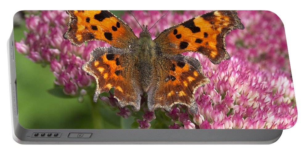 Comma Portable Battery Charger featuring the photograph Comma 2 by Richard Thomas