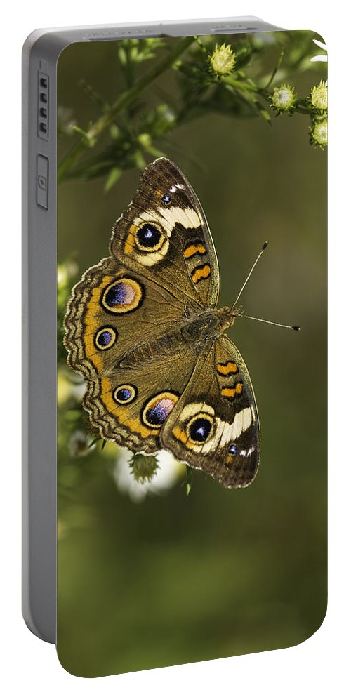 Common Buckeye Portable Battery Charger featuring the photograph Common Buckeye 1 by Thomas Young