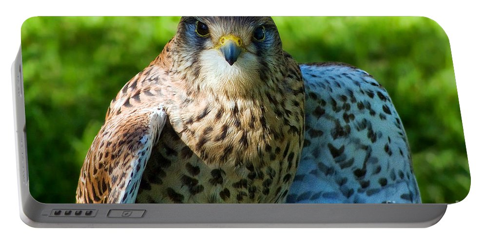 Kestrel Portable Battery Charger featuring the photograph Common Kestrel by Susie Peek