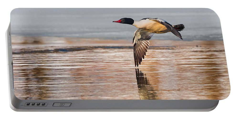 Duck Portable Battery Charger featuring the photograph Common Merganser In Flight by Bill Wakeley