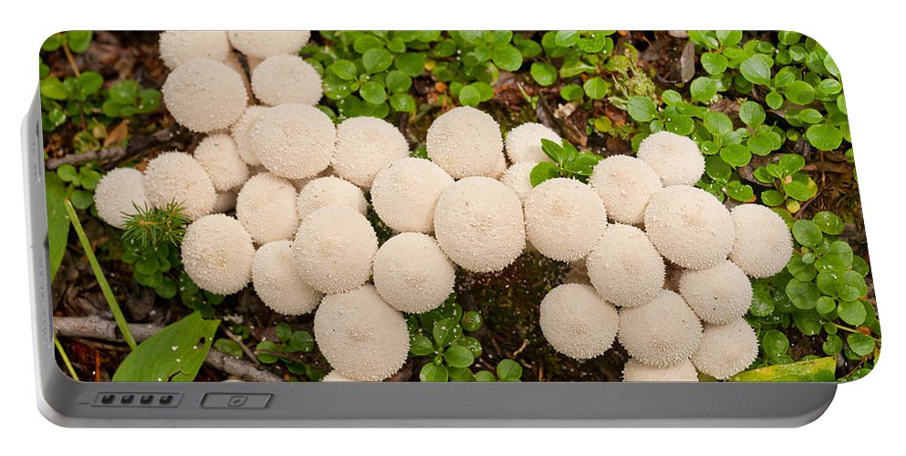Autumn Portable Battery Charger featuring the photograph Common Puffball Mushrooms Lycoperdon Perlatum by Stephan Pietzko