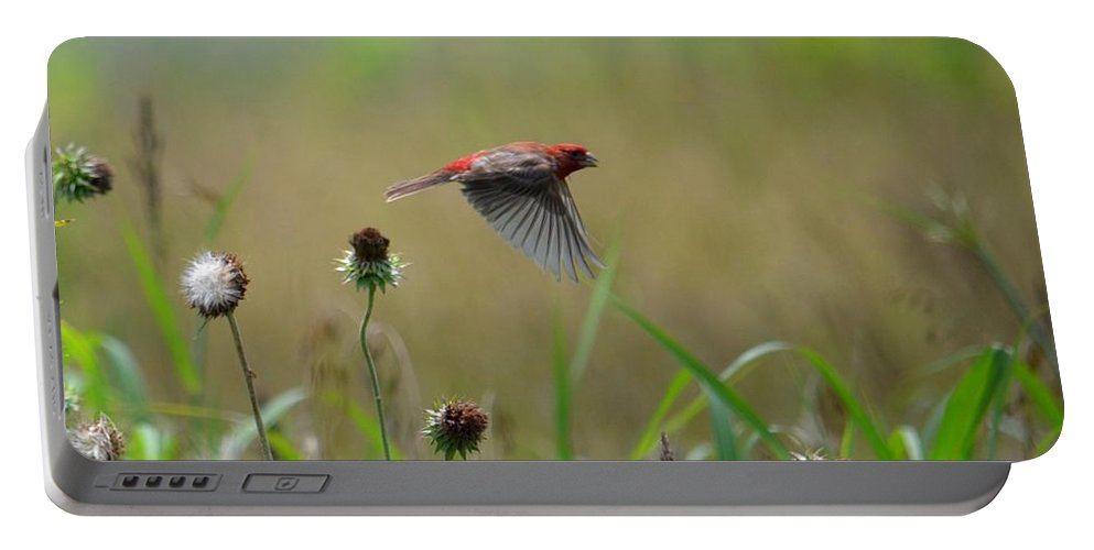 Common Redpoll In Flight Portable Battery Charger featuring the photograph Common Redpoll In Flight by Maria Urso