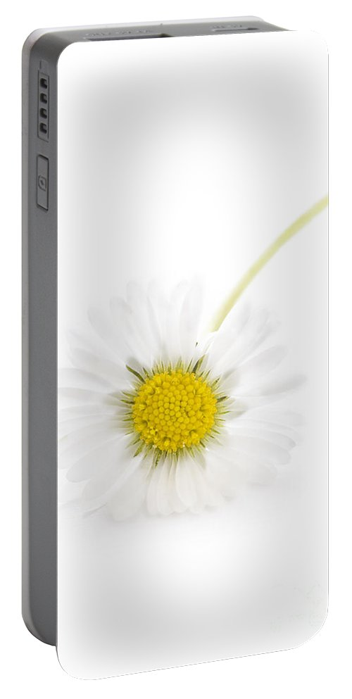 Daisy Portable Battery Charger featuring the photograph Common Wild Daisy by Lee Avison