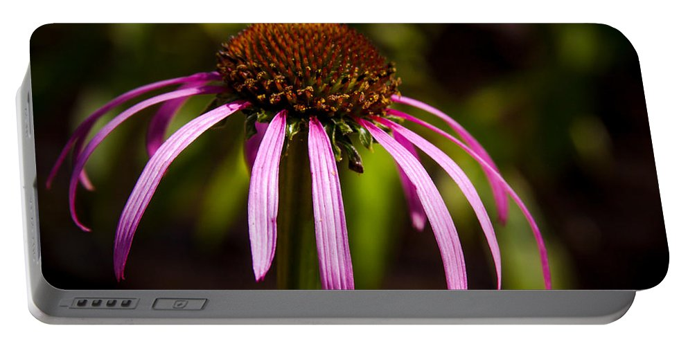 Coneflower Portable Battery Charger featuring the photograph Cone Flower 2 by Lynne Jenkins
