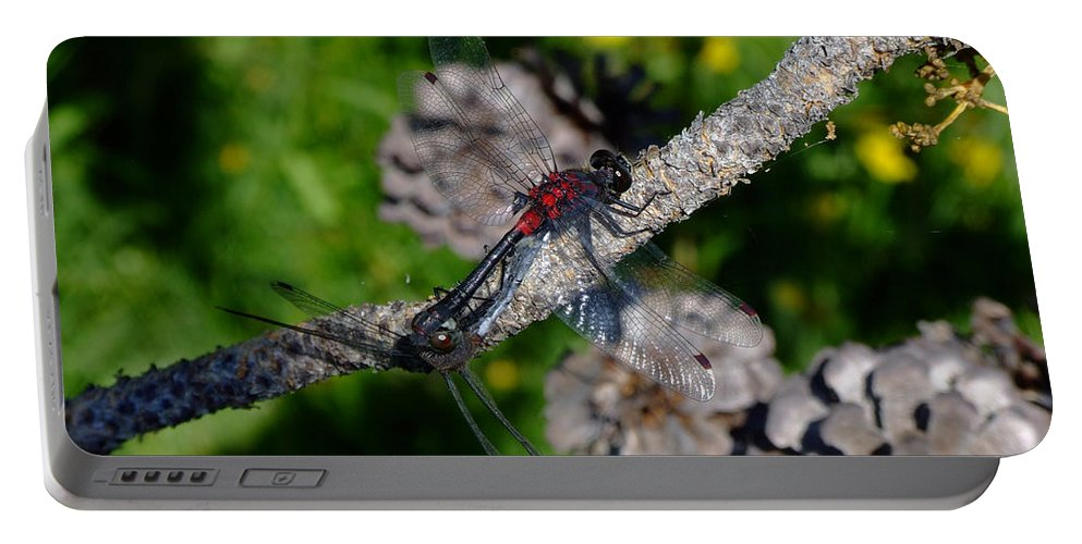 Dragonfly Portable Battery Charger featuring the photograph Consumate Romantic by Donna Blackhall