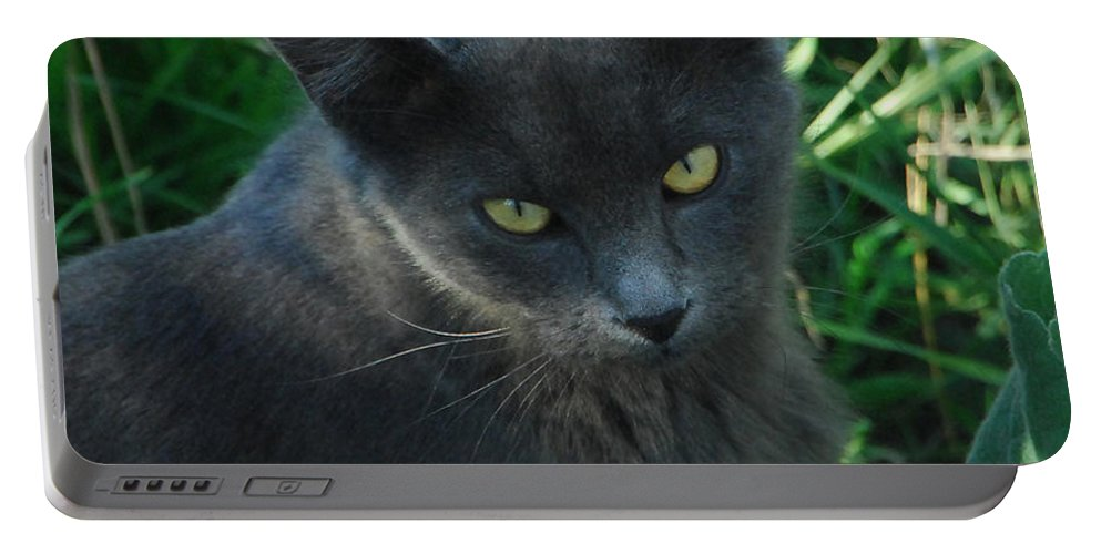 Cat Portable Battery Charger featuring the photograph Contemplation by Donna Blackhall