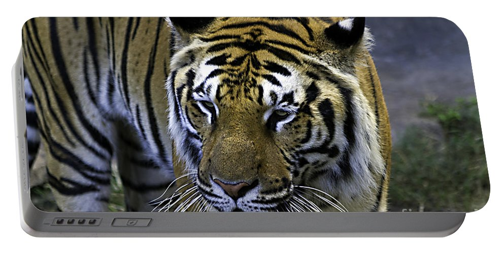 Tigers Portable Battery Charger featuring the photograph Contemplation by Ken Frischkorn