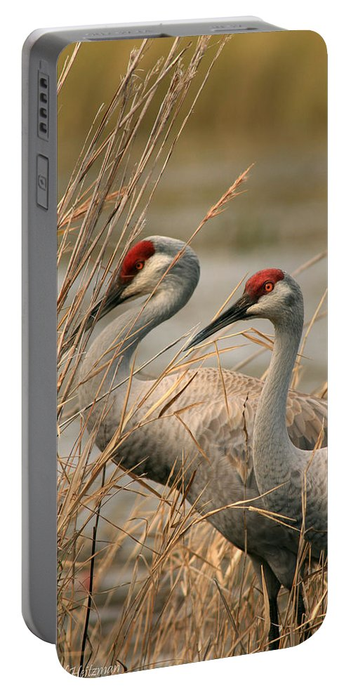 Sandhill Cranes Portable Battery Charger featuring the photograph Content Pair by Crystal Heitzman Renskers