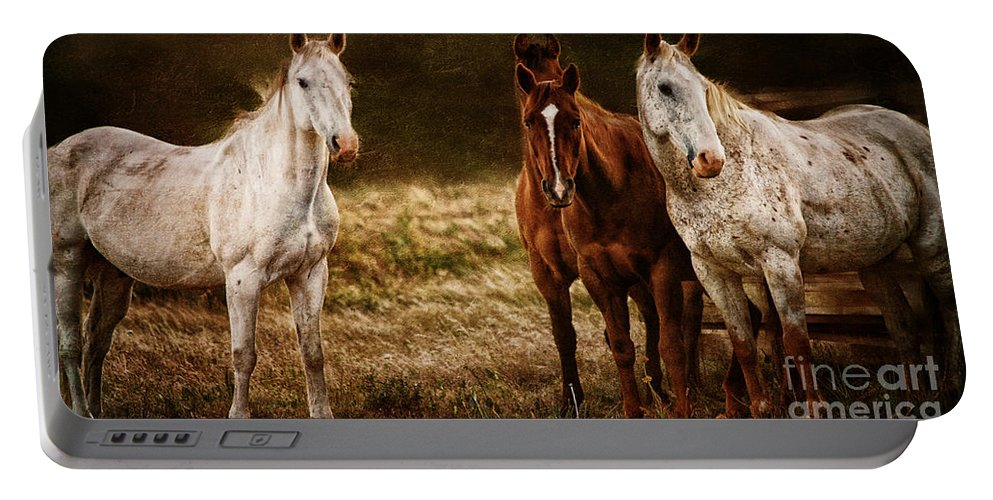 Equine Fine Art Portable Battery Charger featuring the photograph Contentment by Annette Coady