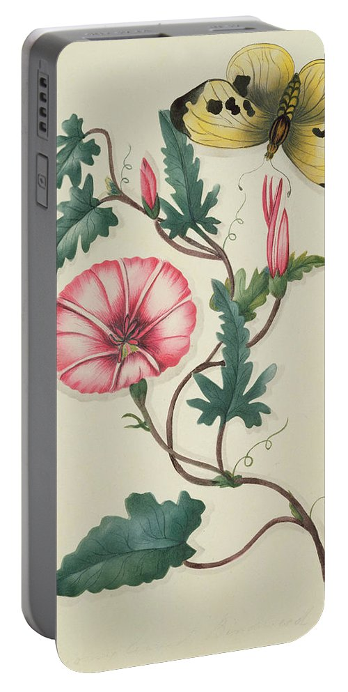 Bindweed Portable Battery Charger featuring the painting Convolvulus With Yellow Butterfly by English School