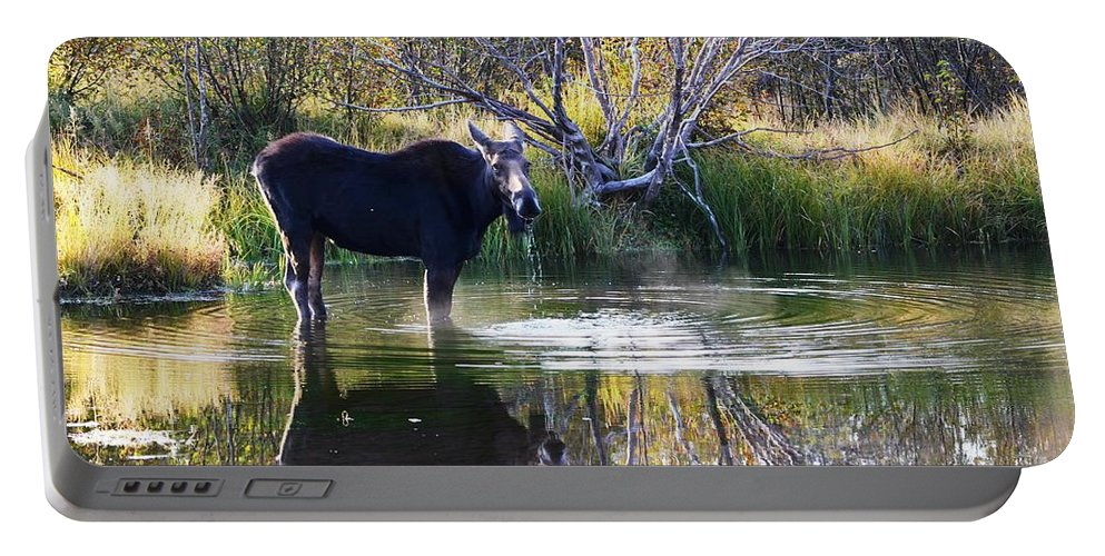 Moose Portable Battery Charger featuring the photograph Cool Fall Air by Deanna Cagle