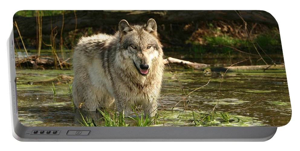 Gray Wolf Portable Battery Charger featuring the photograph Cooling Off by Shari Jardina
