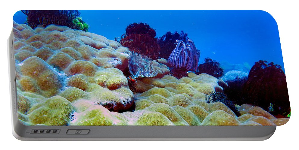 Healthy Corals Portable Battery Charger featuring the photograph Corals Underwater by Paul Ranky