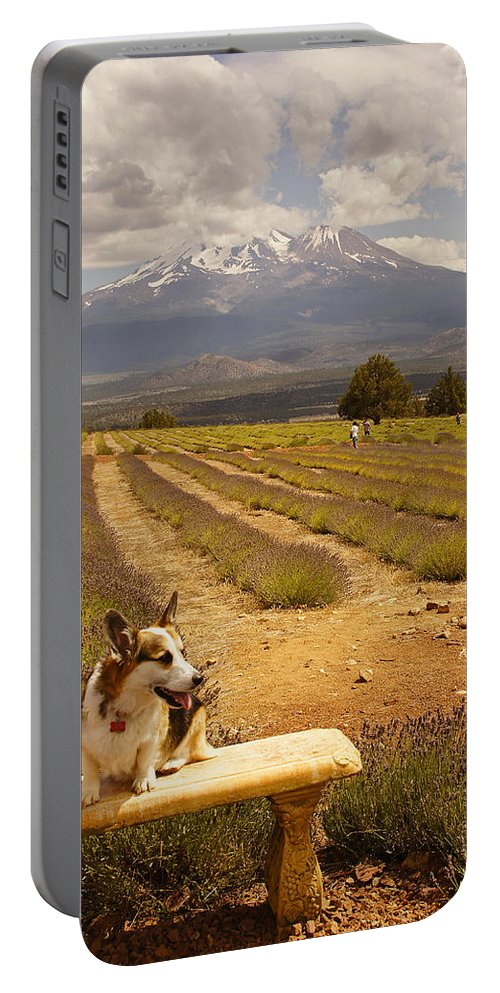 Johnny Portable Battery Charger featuring the photograph Corgi And Mt Shasta by Mick Anderson