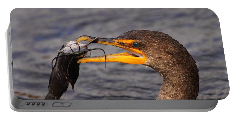 Cormorant Portable Battery Charger featuring the photograph Cormorant Catching Catfish by Bruce J Robinson