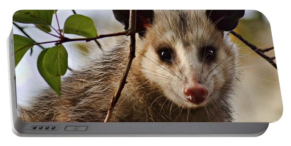 Possum Portable Battery Charger featuring the photograph Coucou - Close-up by Nikolyn McDonald