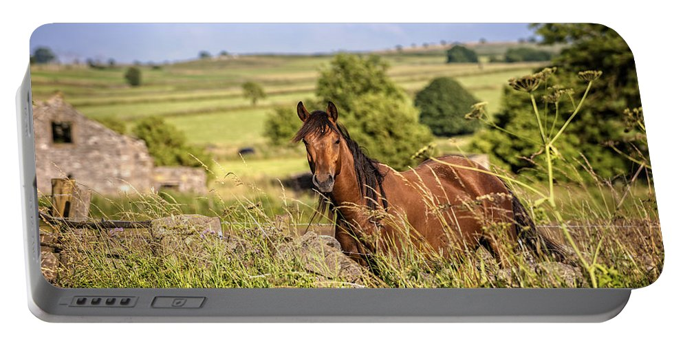 Horse Portable Battery Charger featuring the photograph Countryside Horse by Amanda Elwell