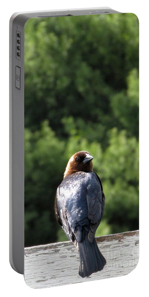 Brown Headed Cow Bird Portable Battery Charger featuring the photograph Cow Bird by Joshua Bales