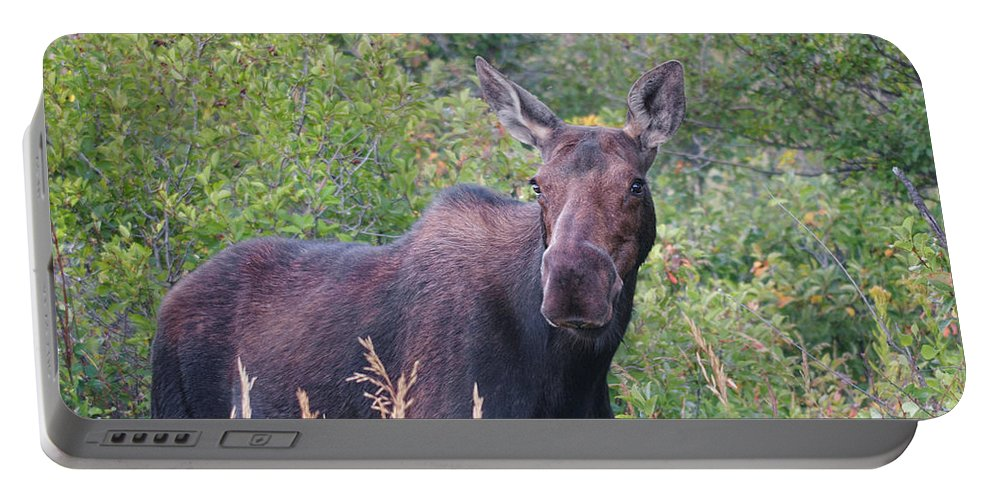 Cow Moose Portable Battery Charger featuring the photograph Cow Moose Portrait by Timothy Flanigan and Debbie Flanigan