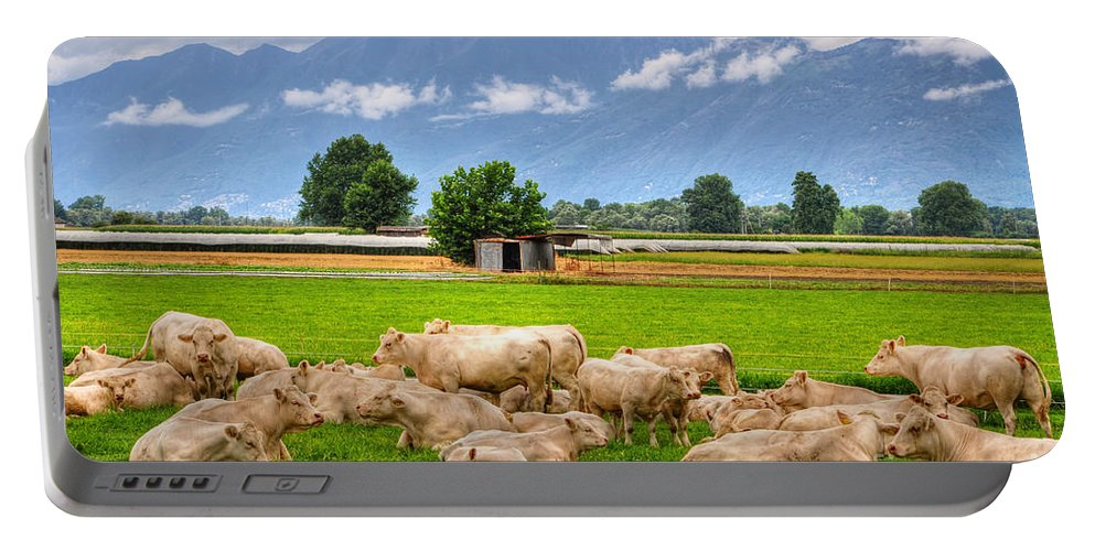 Cow Portable Battery Charger featuring the photograph Cows On The Green Field by Mats Silvan