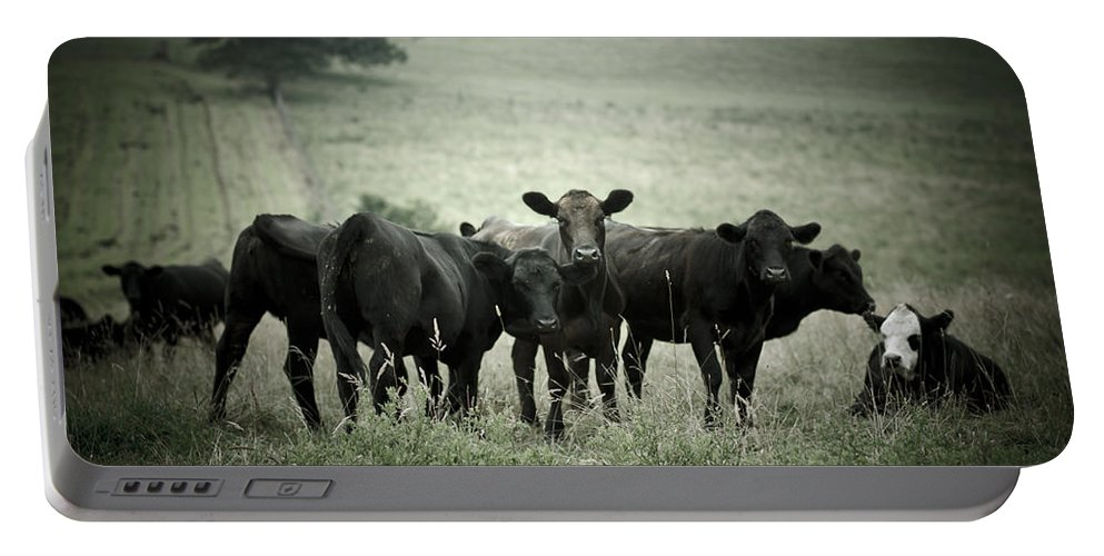 Cows Portable Battery Charger featuring the photograph Cows by Shane Holsclaw