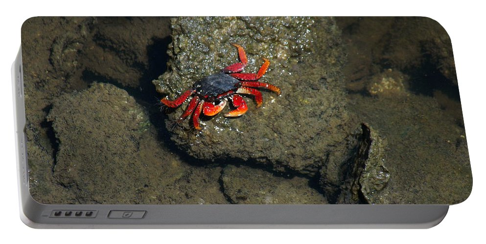 Crab Cake Portable Battery Charger featuring the photograph Crab Cake by Jennifer Lavigne