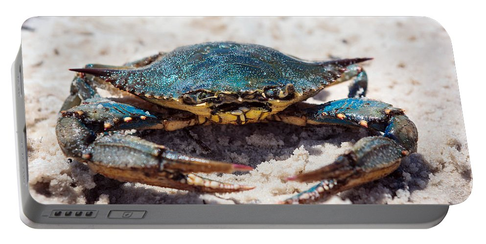 Long Beach Portable Battery Charger featuring the photograph Crabby Crab by Sennie Pierson