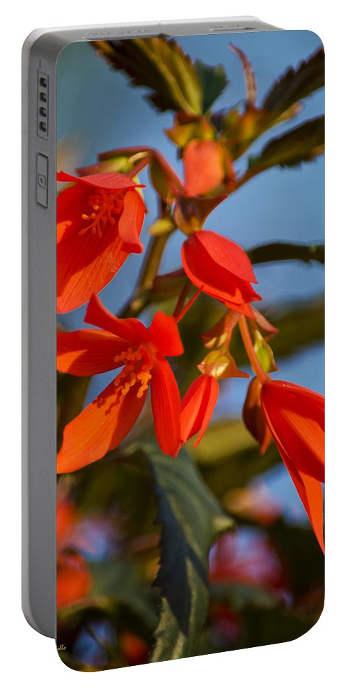 Blue Portable Battery Charger featuring the photograph Crackling Fire Begonia by Christina Rollo