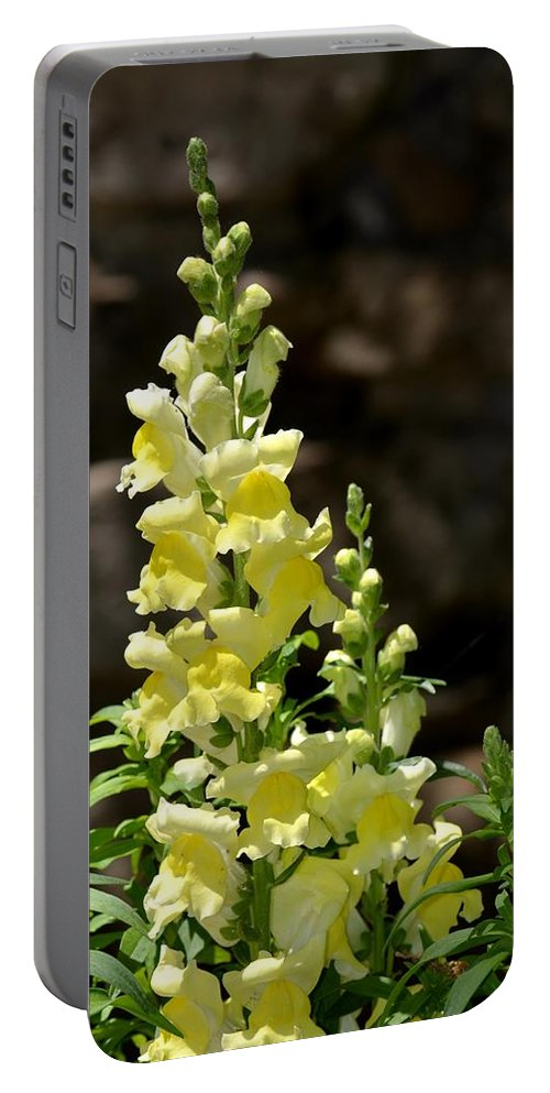 Creamy Yellow Snapdragon Portable Battery Charger featuring the photograph Creamy Yellow Snapdragon by Maria Urso