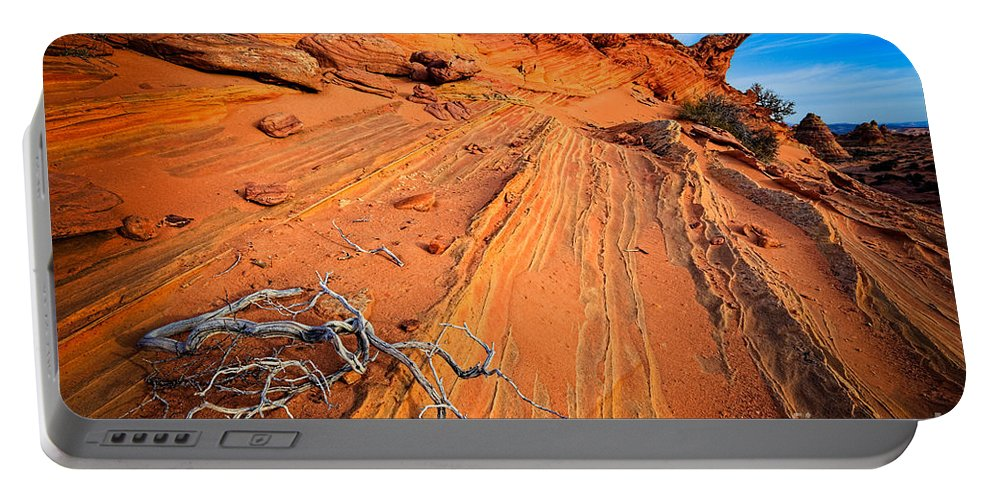 America Portable Battery Charger featuring the photograph Creeping Branches by Inge Johnsson
