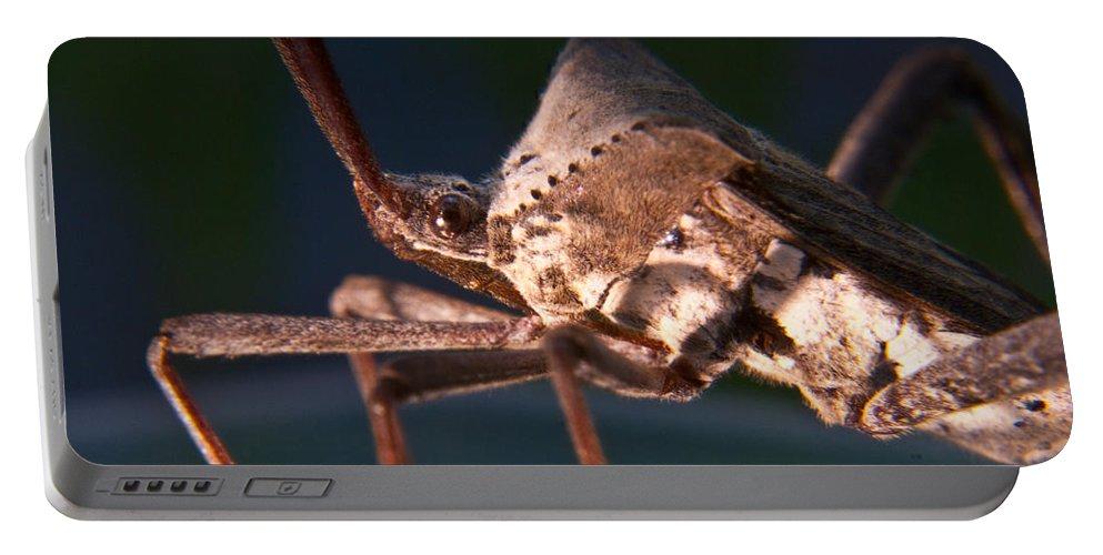 Bug Portable Battery Charger featuring the photograph Creepy Bug by Douglas Barnett