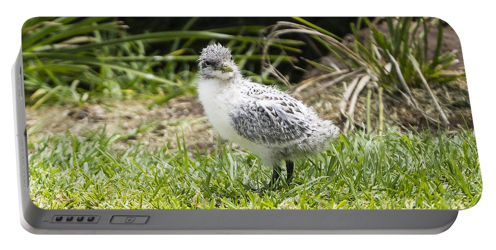 Australia Portable Battery Charger featuring the photograph Crested Tern Chick - Montague Island - Australia by Steven Ralser