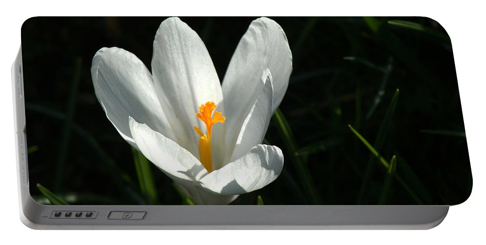 Crocus Portable Battery Charger featuring the photograph Crocus by Chris Day