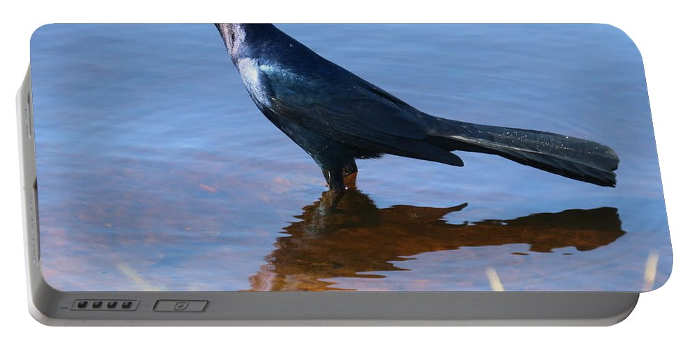 Crow Portable Battery Charger featuring the photograph Crow In The Water by Zina Stromberg