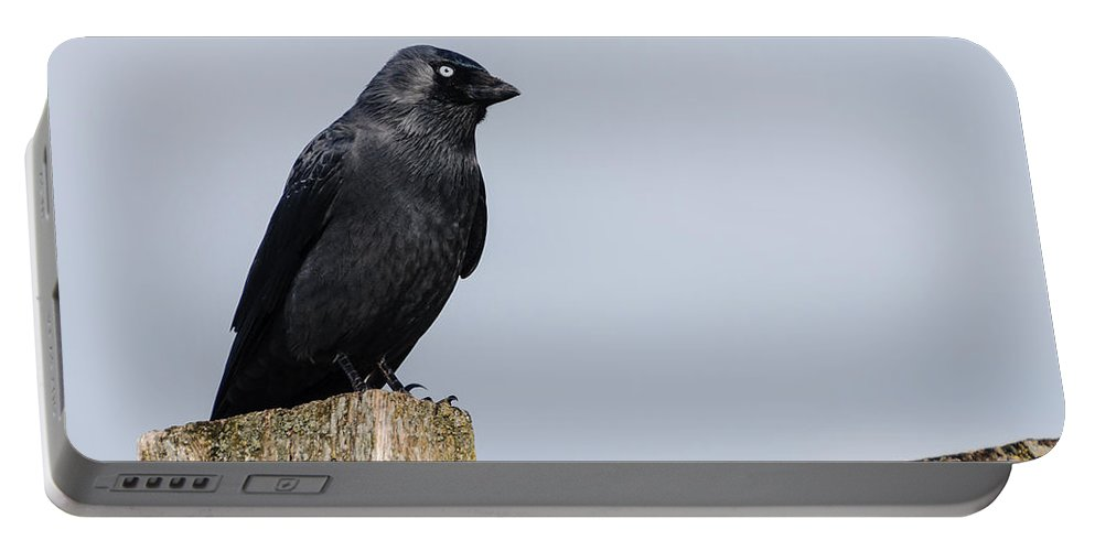 Bird Portable Battery Charger featuring the photograph Crow Perched On A Fence by Dutourdumonde Photography