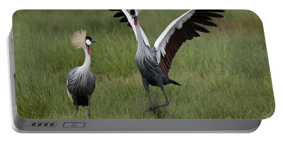 Africa Portable Battery Charger featuring the photograph Crowned Cane Courtship Display by John Shaw