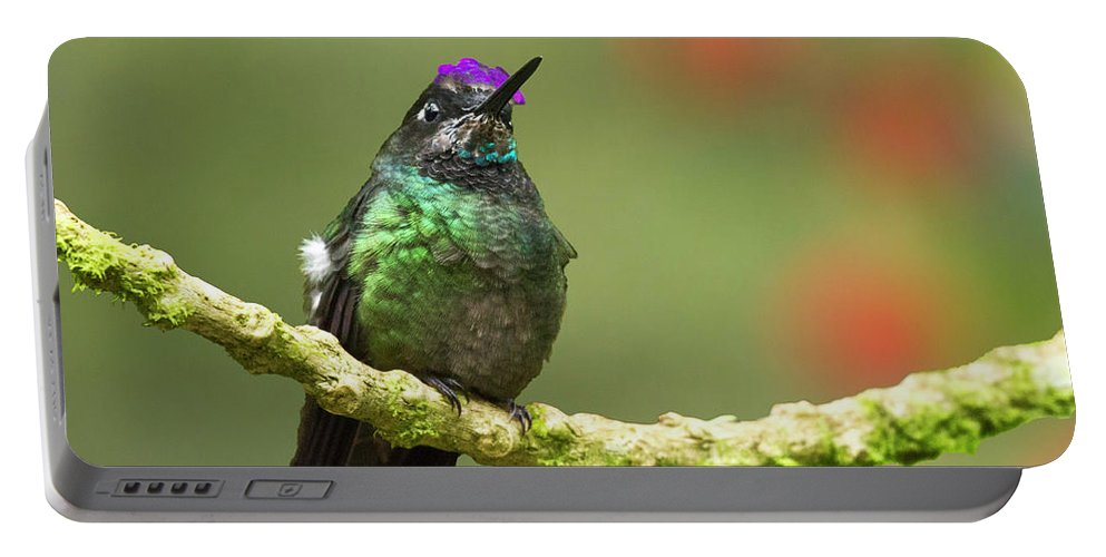 Magnificent Hummingbird Portable Battery Charger featuring the photograph Crowned Hummingbird by Heiko Koehrer-Wagner