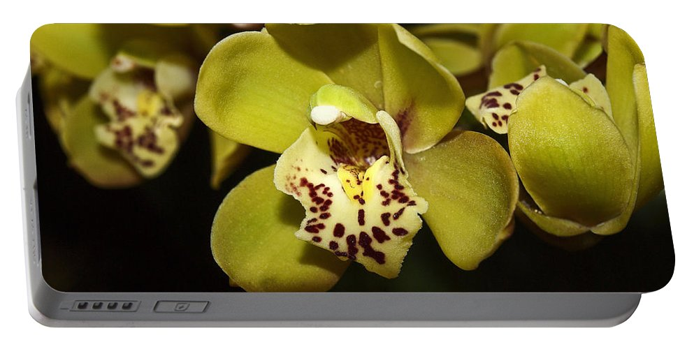 Cymbidium Orchid Portable Battery Charger featuring the photograph Cumbidium Orchid by Howard Stapleton