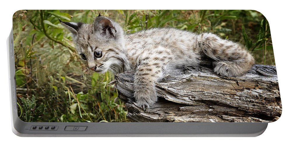 Bobcat Portable Battery Charger featuring the photograph Curiosity by Elaine Haberland