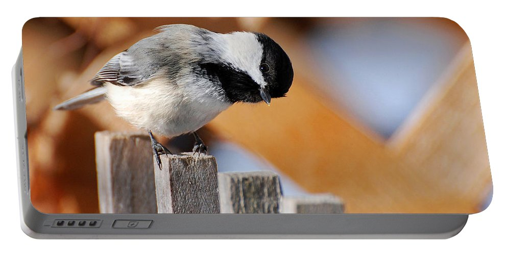 Bird Portable Battery Charger featuring the photograph Curious Chickadee by Christina Rollo