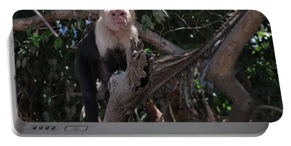 Capuchin Portable Battery Charger featuring the photograph Curious by Jessica Myscofski