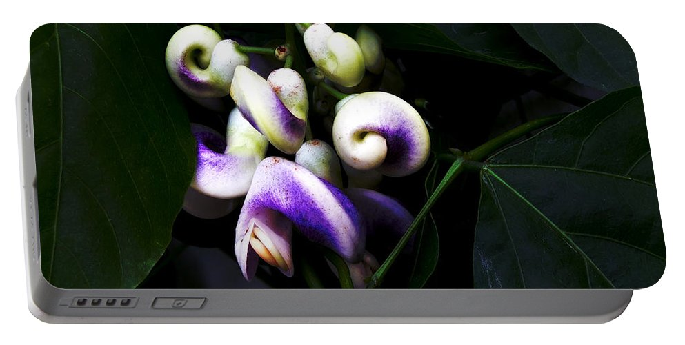 Snail Vine Portable Battery Charger featuring the photograph Curlicues by RC DeWinter