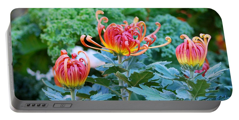 Flowers Portable Battery Charger featuring the photograph Curly Flowers by Nancy Mueller
