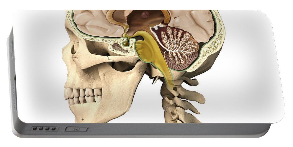 Anatomy Portable Battery Charger featuring the digital art Cutaway View Of Human Skull Showing by Leonello Calvetti