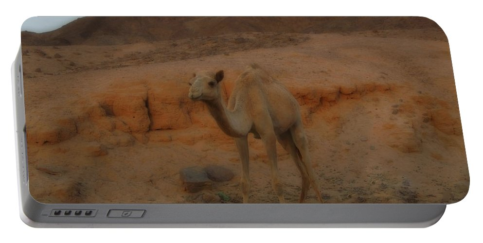 Colette Portable Battery Charger featuring the photograph Cute Young Camel Desert Sinai Egypt by Colette V Hera Guggenheim